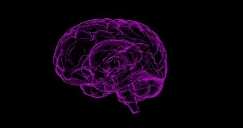 Press (re)play to remember: How the brain strengthens memories during sleep
