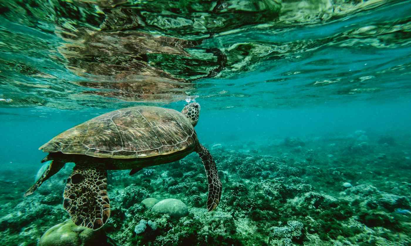 New Australian Marine Parks Will Protect an Area Twice the Size of the Great Barrier Reef